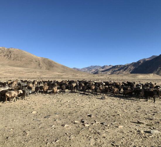 パミール高原ツアー | キルギス旅行社Tripland